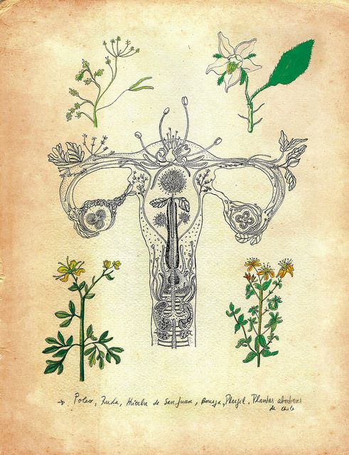 plantas medicinales para la menstruación